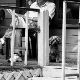 Telluride Dog 3