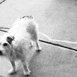 Telluride Dog